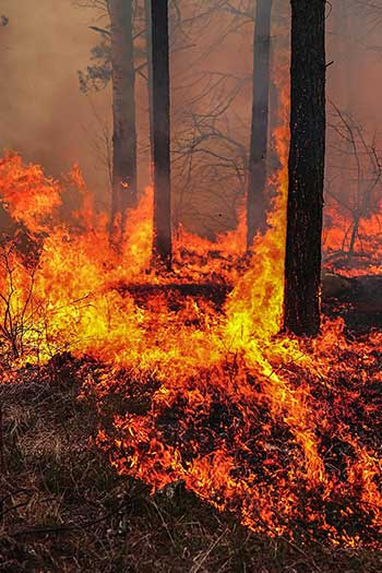 Photograph of a forest fire