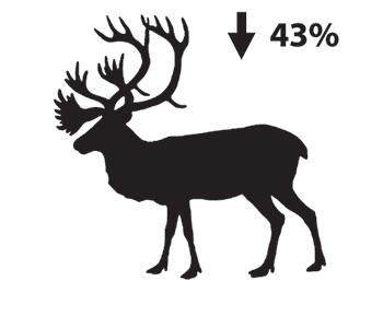 Silhouette depiction of a caribou