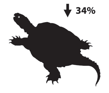 Silhouette depiction of a snapping turtle