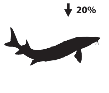 Silhouette depiction of a sturgeon