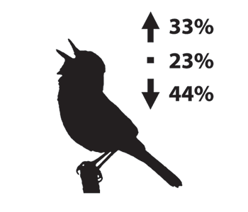 Silhouette depiction of a warbler