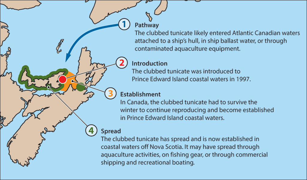 Map showing the areas of invasion of clubbed tunicates in Atlantic Canadian waters and the progression of their invasion