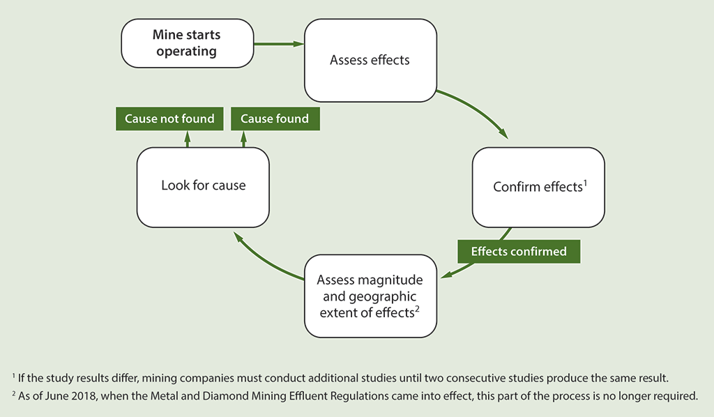 Diagram of the process followed for assessing the effects of mining effluent on fish and their habitat