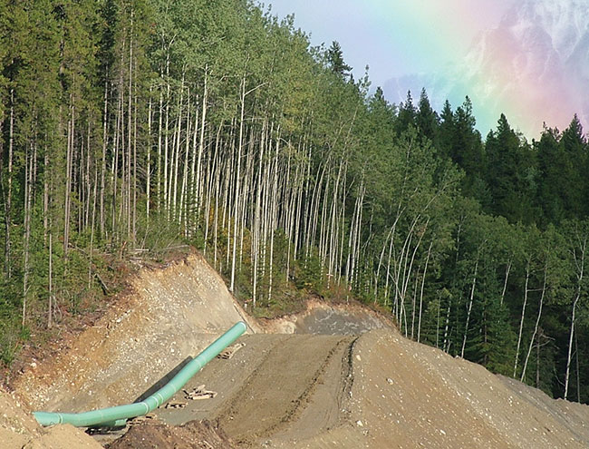 Photograph of a pipeline lying on a cleared track beside a forest